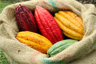Resultado de imagen para cacao de san vicente de chucurí
