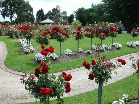 Garden Design Best Rose Garden Design