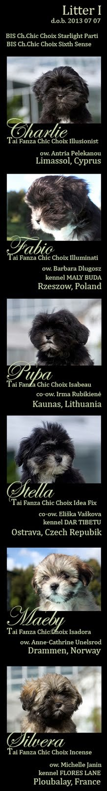 Tai Fanza litter #2