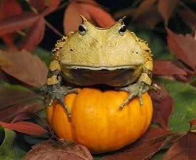 Funny halloween animals 24