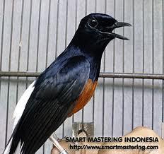 http://burung-info.blogspot.com/