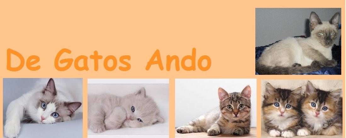 De Gatos Ando
