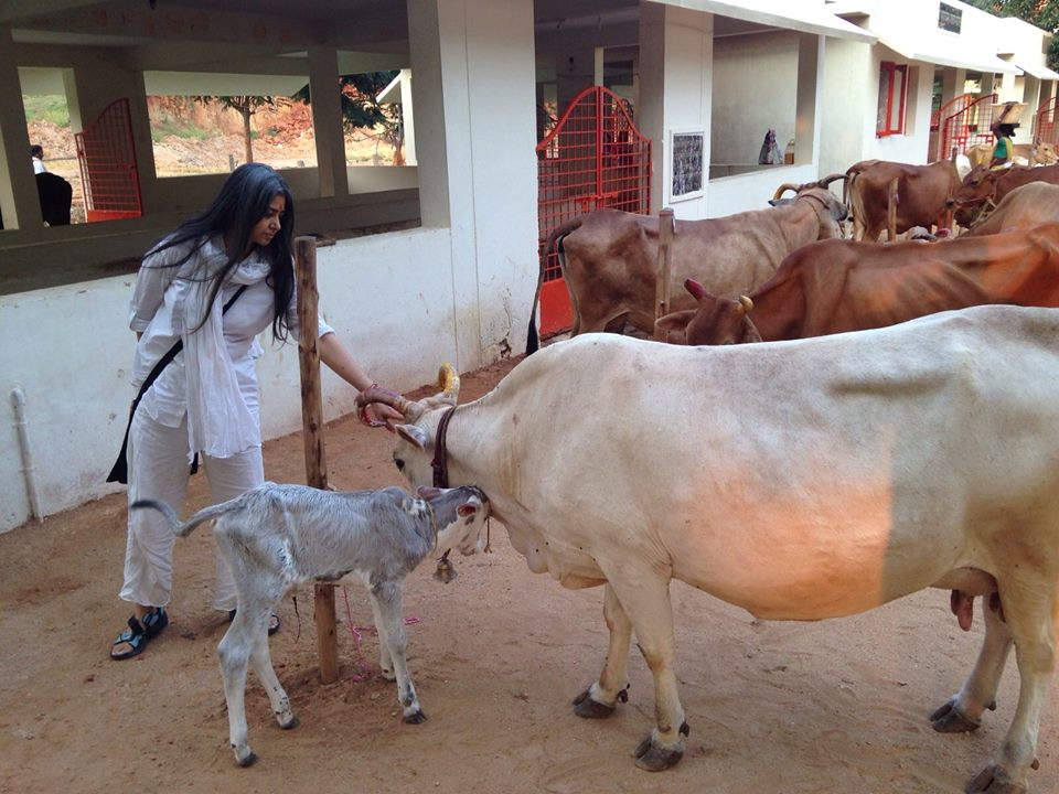 Mother and Child. Rescued cow from the slaughter house gave birth to a beautiful baby :-)