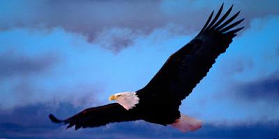 Aguila en movimiento