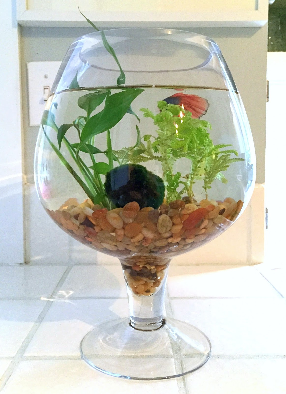 the perfect gift for an animal lover a betta fish bowl