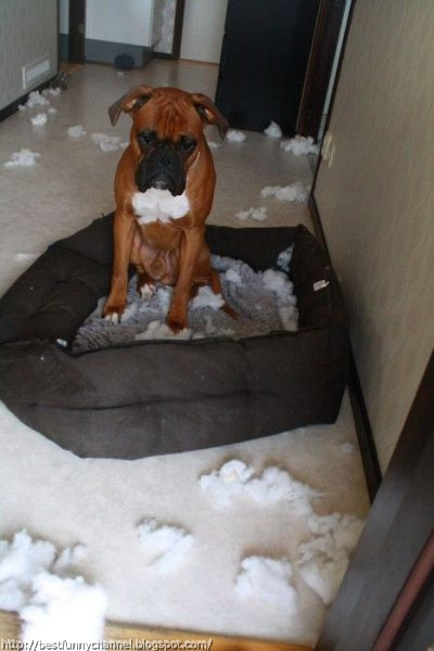 Funny pets behaving badly 10