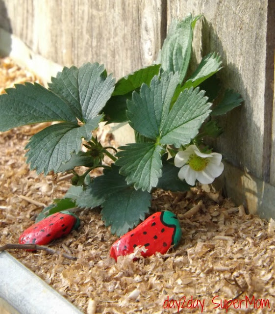 Strawberry Rocks to keep the birds out of your patch ~ DIY Friday