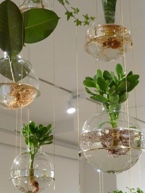 根っこを見せるガラスの器で吊るす