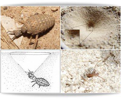 5 Curiosos e fascinantes insetos predadores
