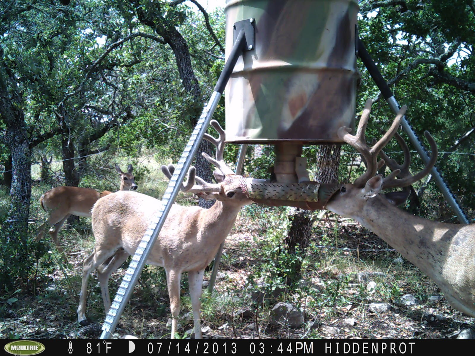 of months out has feeder year deer feeders and making hangers eight protein bucks eye bug old proof documented in wall