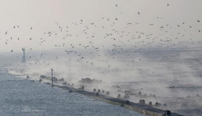 Siap - Siap : Mega-Tsunami 243 Meter Datang Lagi