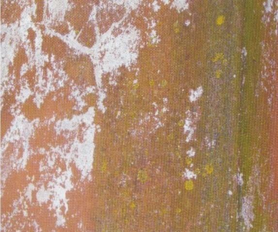 Contaminação-por-algas-pintar-a-casa