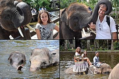 Elephant Safari Park Ubud Bali 2013 rebeccatrex