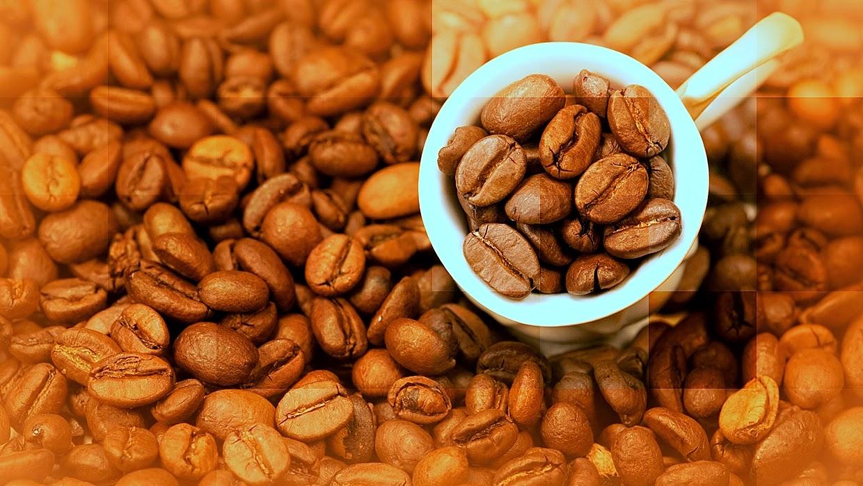 Café brasileiro dá lucro para a Alemanha!