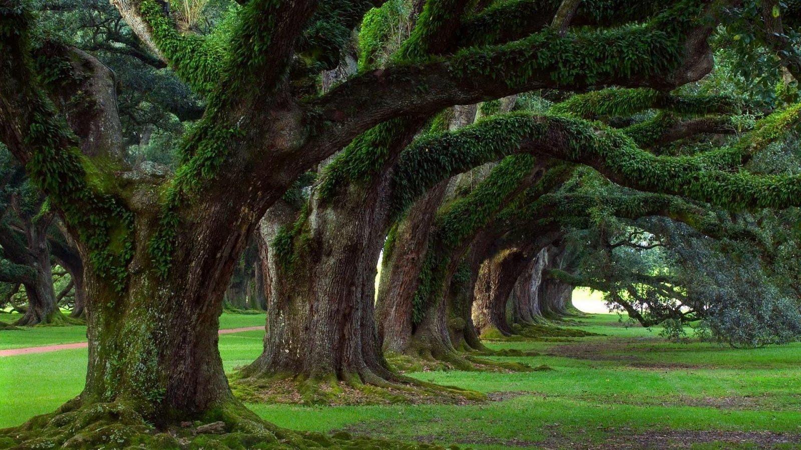 http://4.bp.blogspot.com/-3bLYbUSkbGc/Tfx6CNc1K_I/AAAAAAAADXg/YtWIpxzjtII/s1600/1920x1080_fond-ecran-nature-paysages-arbres-036.jpg