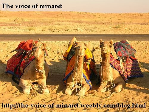 http://the-voice-of-minaret.weebly.com/blog.html