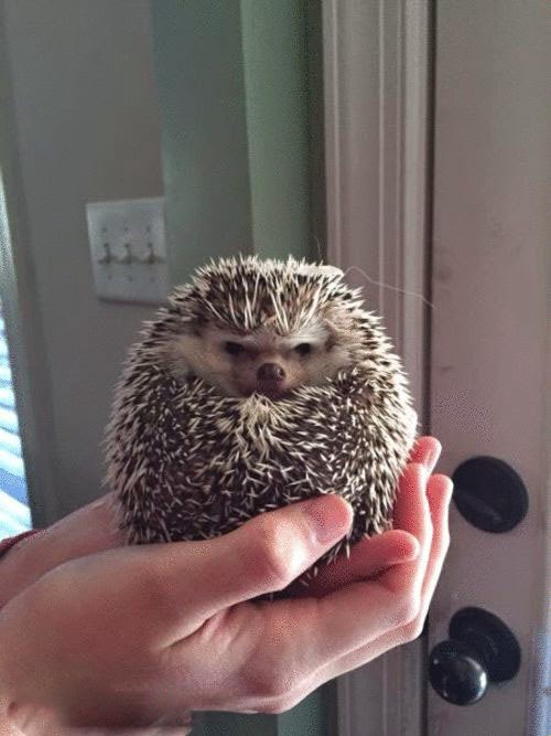 This Little Hedgehog Wants to be Left Alone