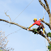 Looking a World Famous Millbrae & San Francisco Tree pruning services