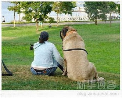 Giantdogs+%252813%2529  Σκυλιά… γίγαντες (photos)