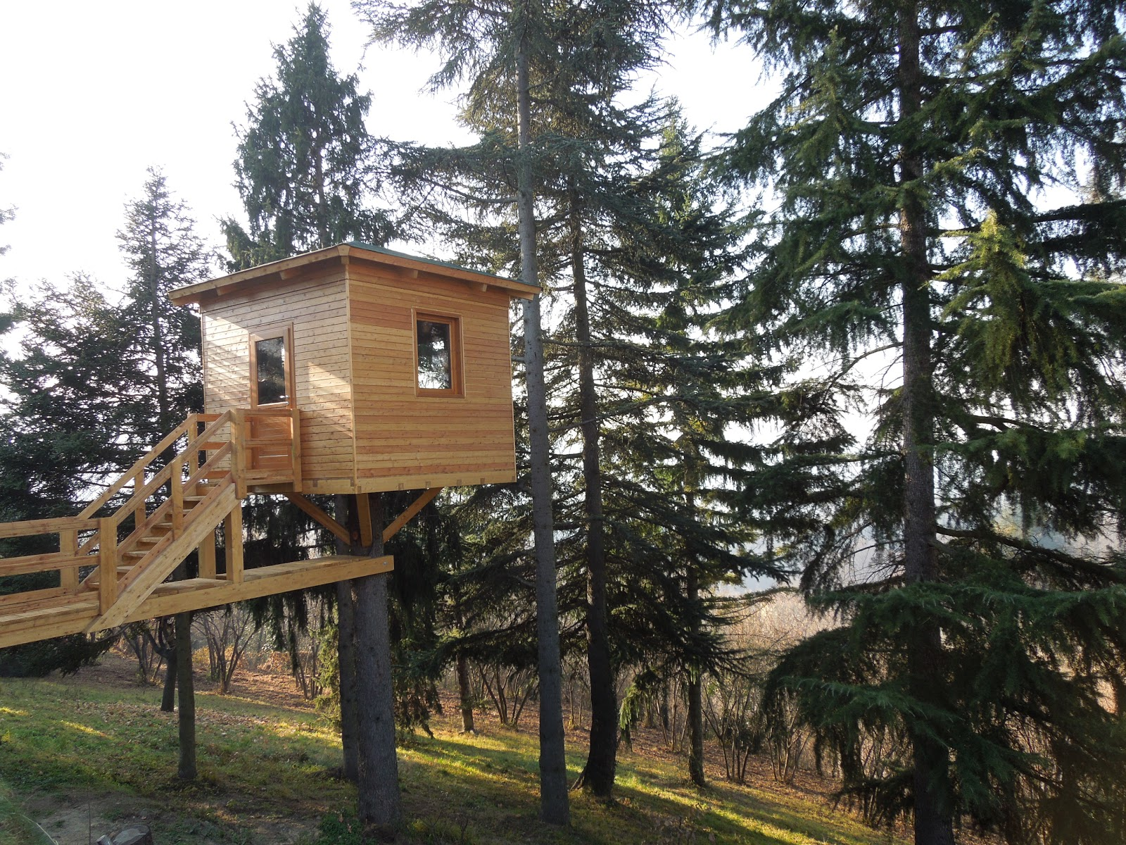 La casa sull 39 albero l 39 architetto - Casa sull albero progetto ...