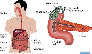 What Causes Gallbladder Attacks?