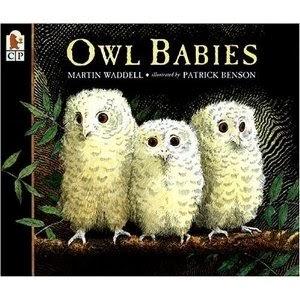 Owl Babies - A Story