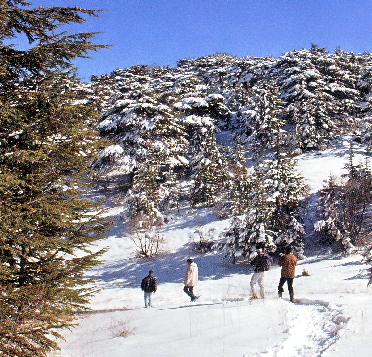 Shouf Lebanon  city photos : Lebanon Asia And The Middle East What is Fatmagul's Fault