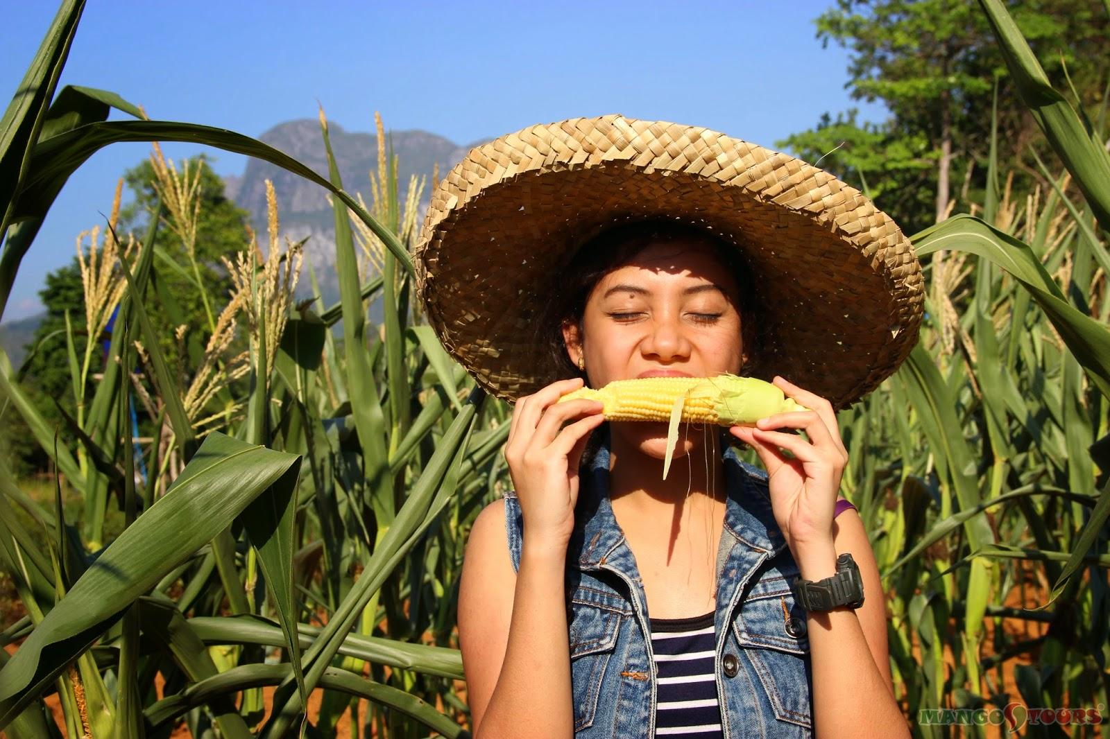 Mango Tours Puerto Princesa Palawan Sheridan Organic Farm