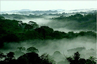 Critical for Congo Forest