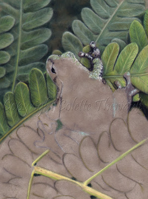 Frog Painting in pastel on the easel by Animal Artist Colette Theriault