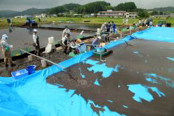 Workers experiment with draining radioactively contaminated mud from a paddy field, left, onto a tarp-covered adjacent field in Iitate, Fukushima Prefecture, on Aug. 24. (Mainichi)