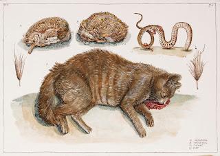 Dead Hedgehog Snake Black Cat Road kill