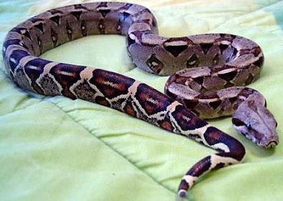 La serpiente tiene la piel recubierta por escamas