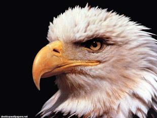 Que farta a tua boca de bens, de sorte que a tua mocidade se renova como a da águia.