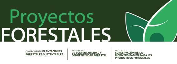 Extensi n forestal convocatoria proyectos de for Proyecto productivo de vivero forestal