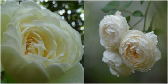 45 piuttosto Rosso Bianco /& Blu Bottoni in Legno Animali Farfalle Hearts /& Flowers,