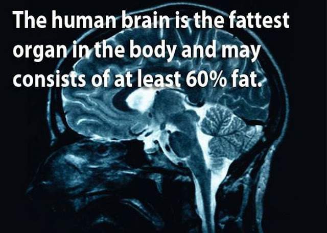 amazing facts, facts about human brains, human brains, amazing human brains, facts, science, science fact