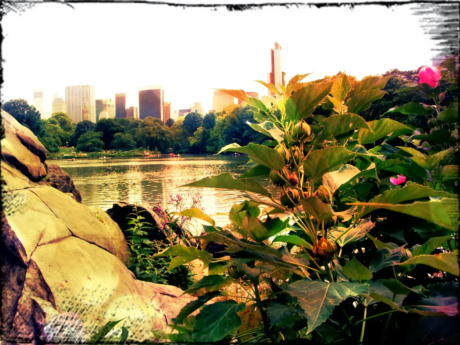 Central Park Hernshead