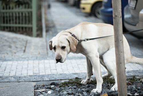 pet  Diarréia em Cães Causas e Tratamentos