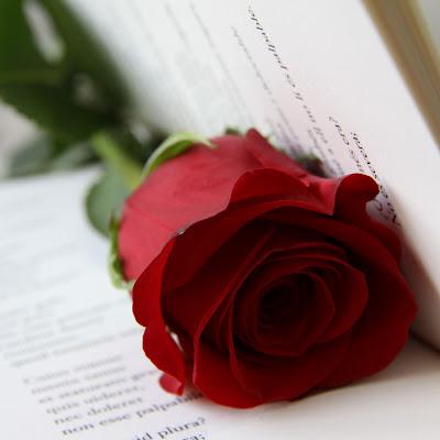 Rosa_San Jorge_Sant Jordi