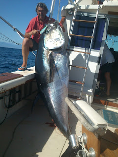 Big game fishing. Tuna, deep sea fishing. Marbella, Spain.