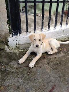 Χαρίζεται σκυλάκι μεσαίου μεγέθους αρσενικό, 3 μηνών περιπου...