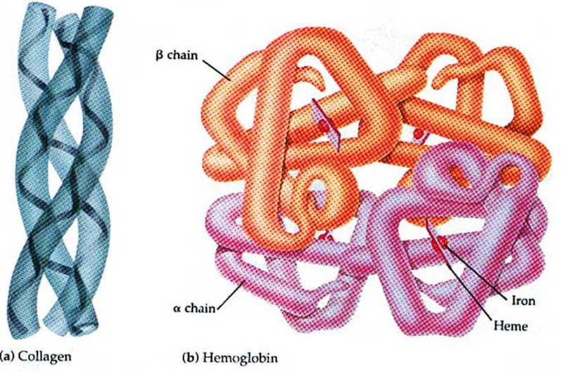 Quaternary Structure Vs. Tertiary Structure Proteins - Access Revi...