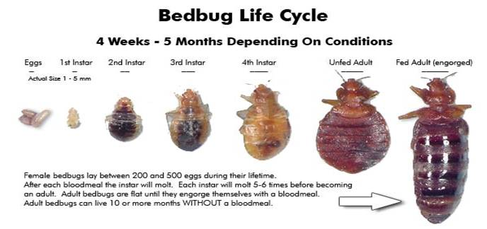 Dryer Sheets And Bed Bugs 28 Images To Get Rid Of