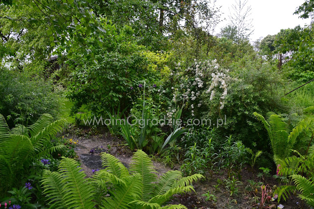 projektowanie ogrodow ogrod naturalny