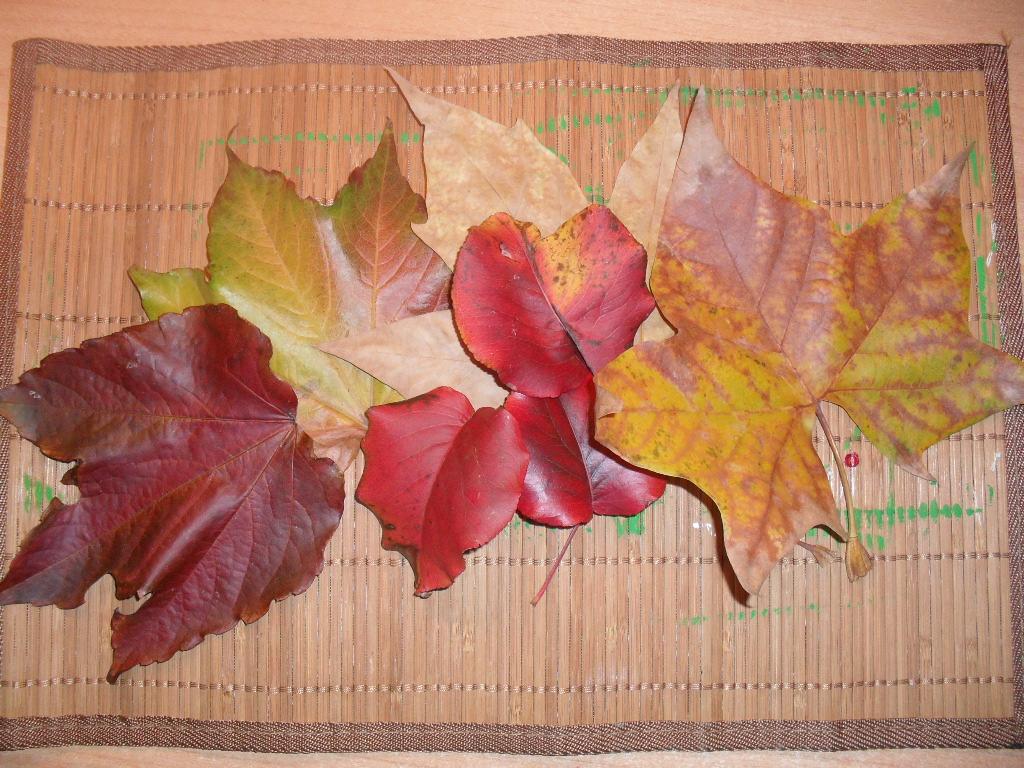 La sombra del pentaculo decoraci n con hojas de oto o - Hojas de otono para decorar ...