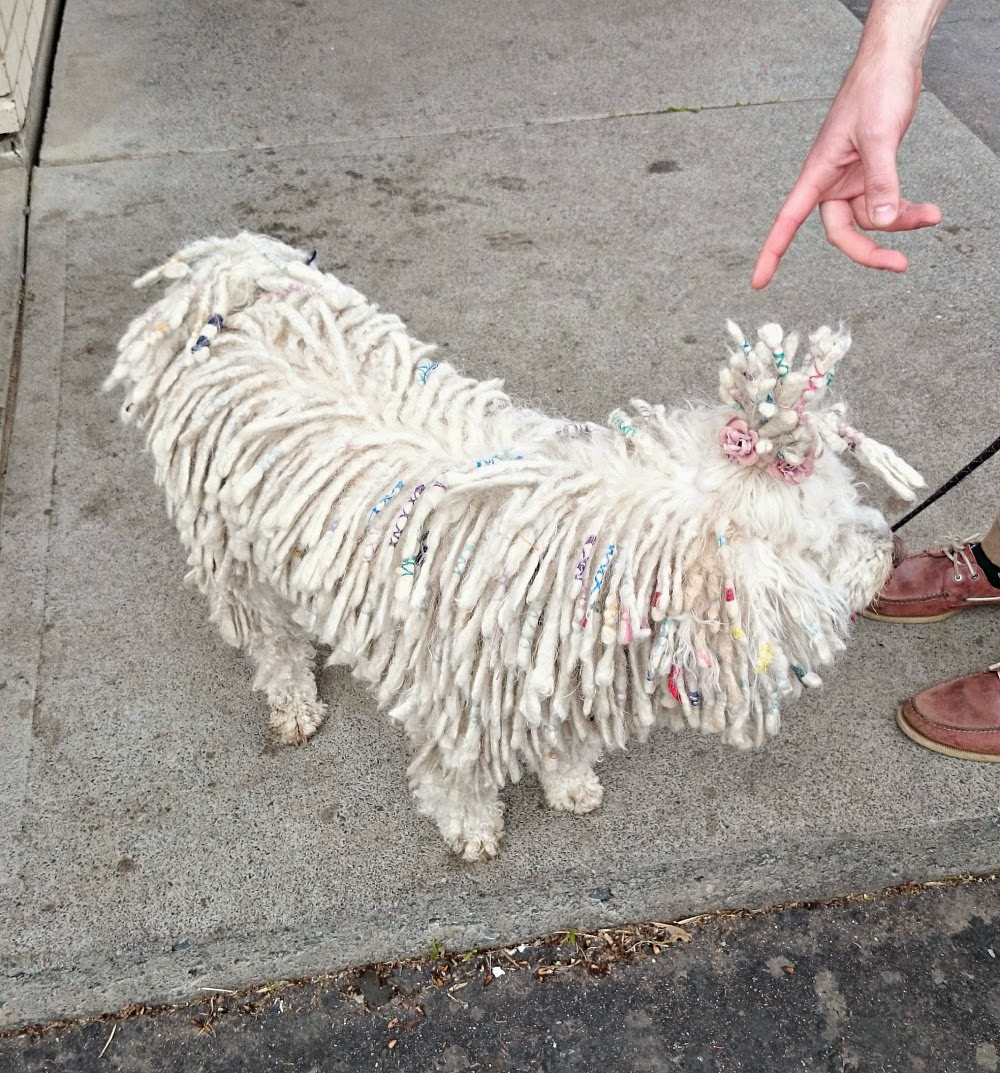 White Puli with Cords