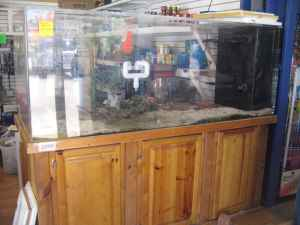 Giant aquariums 300 gallons saltwater aquarium 2000 for 800 gallon fish tank