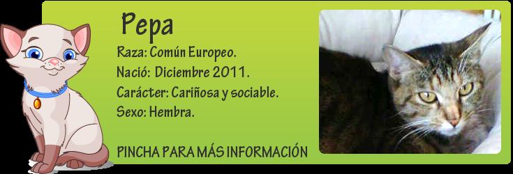 http://mirada-animal-toledo.blogspot.com.es/2012/12/pepa-gata-super-buena-en-adopcion.html
