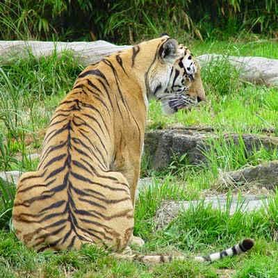 manas national park or manas wildlife Manas national park has an exotic feel to it, with a stunning dense forest and the  blue hills of bhutan looming in the distance home to the tiger, elephant, wild.